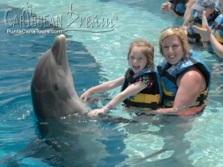 dolphin happy family