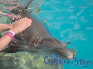 Petting Dolphin