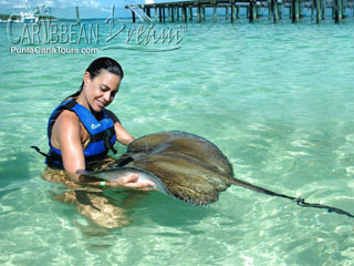 Swim with Stingrays