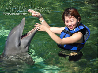 Learn to give Dolphins cues