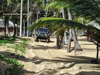 Palm Trees Jeep Safari