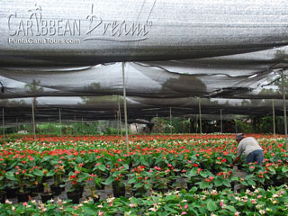 Flower Farm in Los Haitises