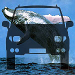 Whale Watching By Bus - Adult