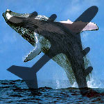 Whale Watching by Plane - Adult