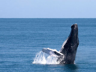 Samana Bay Whale Watching